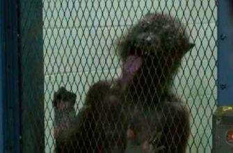 Раскрыта неприятная сцена из «Отряда самоубийц: Миссия навылет»